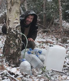 fergus the forager: Tapping Birch: Collecting birch sap for mineral water, wine, beer, vinegar and syrup
