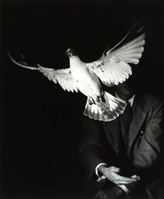 """ Harold Edgerton ""Rising Dove,"" 1934 (from crashinglybeautiful, Wait-what?, and liquidnight, billyjane. History Of Photography, People Photography, Vintage Photography, Animal Photography, Harold Edgerton, Matt Hardy, Tarot, Georg Christoph Lichtenberg, Night Circus"