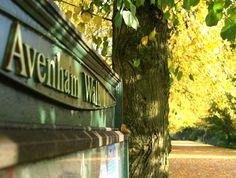 Avenham Walk, Preston, by Tony Worrall Preston Lancashire, Autumnal Equinox, Photography Tips, Past, Photos, Pictures, England, Memories, History