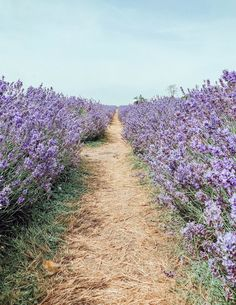 Flower Field of Dreams Spring Aesthetic, Nature Aesthetic, Flower Aesthetic, Aesthetic Drawing, Aesthetic Vintage, Photo Bougie, Lavender Aesthetic, Field Of Dreams, Flower Quotes