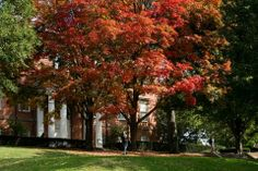 Tufts campus in the fall