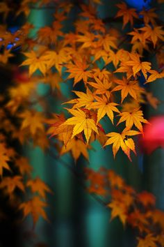 Photograph Bamboo and maple by Manabu Oda on 500px