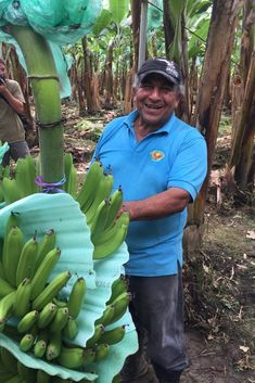 In Ecuador, small-scale banana farmers like those at the AsoGuabo cooperative, offer an alternative to corporate fruit and a model for real fair trade. United Fruit Company, Co Op Food, Harvest Market, Food Distributors, Fair Trade Chocolate, Specialty Foods, Fresh Fruits And Vegetables, Organic Farming, Natural Foods