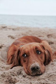 1000 images about c o a s t a l l i v i n g on pinterest beach