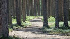 Rokuanvaara on Vuoden Retkikohde 2018 - Ulkoilma Trunks, Plants, Geology, Drift Wood, Tree Trunks, Plant, Planets