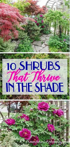 This list of #shrubs is perfect for my shade #garden. I wasn't sure how to fill in the garden bed and now I have a bunch of options. I really like the 4th one. #fromhousetohome #shadegarden #bushes #perennials #gardening #shade #gardeningtips #gardening #gardenideas #shrubs #bushesundertrees #perennialgarden #garden #backyard