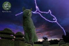 Tolly's not keen on thunder and lightning but The Topiary Cat is much braver than he is. This strike looks quite tasty too! www.facebook.com/topiarycat