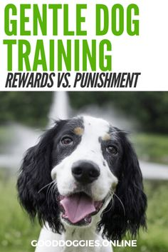 Gentle dog training techniques. Check out these humane dog training techniques. #GoodDoggies #dogs #dogtraining
