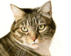 Tekeningen katten
