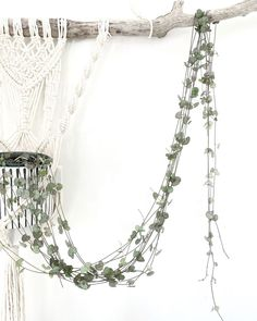 Ceropegia Woodii hanging in my home office. Everything you need to know to care fo Rosary Vines. #stringofhearts #ceropegiawoodii #rosaryvine #wallhanging #macrame #macramewallhanging