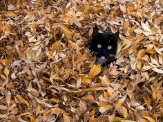 Cats Enjoying the Fall Foliage