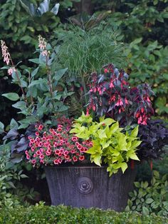 Container Gardening Magazine, 2012 Edition - traditional - landscape - vancouver - by Pot Incorporated Container Flowers, Container Plants, Container Gardening, Succulent Containers, Coleus, Fine Gardening, Vegetable Gardening, Gardening Magazines, Pot Plante