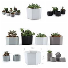 Amazing T4U 2 75 Inch Ceramic Six Sizes Semi Luster Surface succulent Plant  Pot Cactus awesome 3 Mini Hexagonal Modern White Succulent