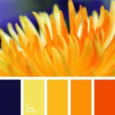 amarillo vivo, amarillo y anaranjado, azul oscuro y amarillo, azul turquí, color mandarina, color naranja, color naranja rojizo, combinación de colores, elección del color, rojo anaranjado, selección de colores, tonos amarillos, tonos anaranjados.