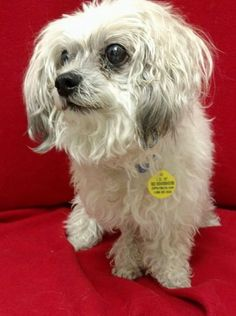 Max is an 8-year-old, male, powderpuff Chinese crested dog. He weighs about 10 pounds, gets along with other dogs and cats, and walks nicely on his leash. The $100 adoption fee helps cover spay/neuter, vaccinations, microchip, vetting, food and care. Call Pets Without Partners at 243-6911. Go to www.petswithoutpartners.org. Go to http://www.redding.com/lifestyle/ to see more pets of the week.