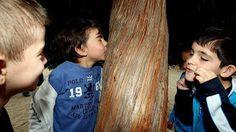 Fotos de los niños para La Voz