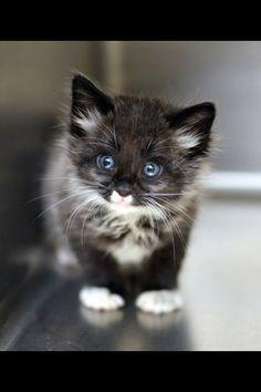 Cat ohhhhhh :-)