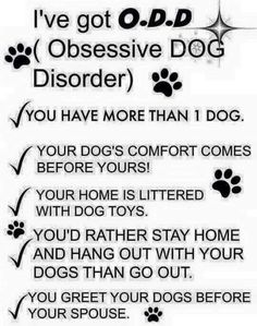 Disorders, Dog quotes and Best dogs on Pinterest