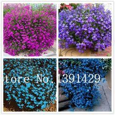 100 pz lobelia semi, giardino bonsai da interno fiore pianta, (blu, purple. White. Pink) Diaopen Vaso di fiori decorazione del giardino