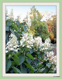 "I added ""Mein Traumgarten: Wochenende Blumen  # 115"" to an #inlinkz linkup!http://mumselsgartenparadis.blogspot.de/2013/09/wochenende-blumen-115.html"