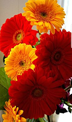 Sunflowers And Daisies, Pretty Flowers, Colorful Flowers, Gerber Daisies, Gerbera Flower, Flower Art, Pineapple Wallpaper, Flower Phone Wallpaper, Daisy Love