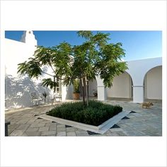 courtyard    greece  greek