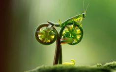 カマキリ、自転車に乗る、みたいな。