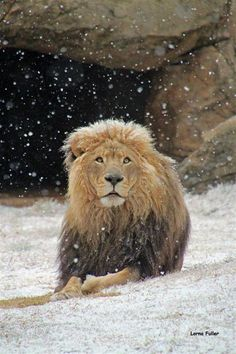 8.7.2012  It snowed in South Africa today; here's a pic from the Johannesburg Zoo.  Very mesmerizing