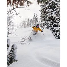 Don't you just love when every day is a powder day? Mark Lantz enjoying untracked lines captured by @chris_twosherpas #SnowbasinResort #Snowbasin75