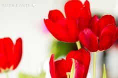 www.katanita.net Tulipan, Tulip