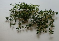 Harvested thyme to enjoy in kitchen