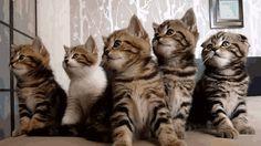 VIDÉO. Passer du temps avec des chatons, solution géniale pour lutter contre le stress
