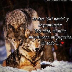 Mejores 97 Imagenes De Lobos En Pinterest Wolves Wolf Y Powerful