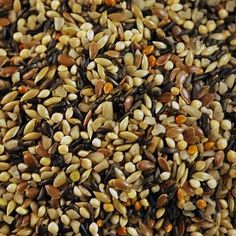 Instead of throwing rice or blowing bubbles at the newly weds throw bird seed! Wild Bird Food, Wild Birds, Blowing Bubbles, Black Eyed Peas, Pet Birds, Animals And Pets, Parrot, Seeds, Wedding Church
