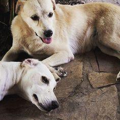 Happy family #dogs #dogsofinstagram #doglovers #dogstagram #dogfamily #love #chill #cute #animallovers #instapet #instadog #petstagram