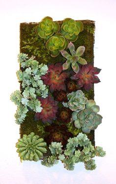 Artificial Succulent Wall Garden Little House Living, Artificial Succulents, Succulent Wall, Contemporary, Garden, Plants, Projects, Color, Design