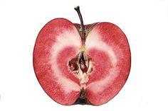 Redlove – Wikipedia