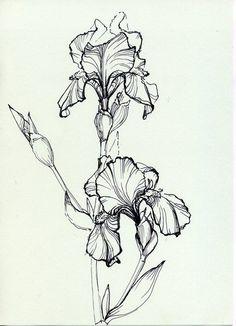 Iris flower                                              Сорочьи радости - Пятница, развлекушки:
