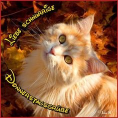Celebrate Each New Day Cute Cats And Kittens, I Love Cats, Animals And Pets, Cute Animals, Chat Maine Coon, Fall Cats, Autumn Animals, Share Pictures, Image Chat