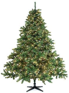 75 ft Douglas Fir Full Discount Pre Lit Christmas Trees 161756 ** More info could be found at the image url.