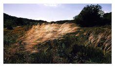 Naturaleza dorada de España #nature #naturaleza #Spain #España #vsco #vscocam #vscoespana