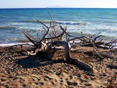 Alberese spiaggia