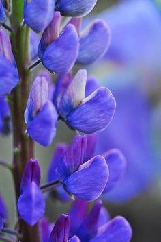 I love blue so do the bees