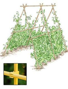 I use these along w/the swivel connecters to make veggie trellises