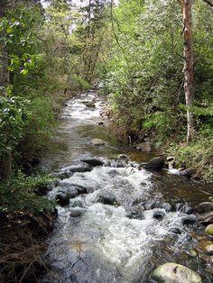 Ashland Creek in Lithia Park, Ashland, Oregon