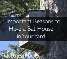 3 Important Reasons to Have a Bat House in Your Yard | Wellness Mama | Bloglovin'