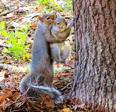Animals And Pets, Baby Animals, Funny Animals, Cute Animals, Beautiful Creatures, Animals Beautiful, Cute Squirrel, Squirrels, Baby Squirrel