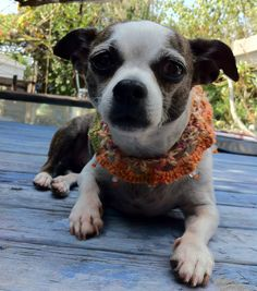 bamboo cotton yarn crochet doggie necklace with beads by ChakaCoco