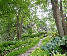 Add Color to Your Side Yard  A wooded hillside provided Jane the perfect place to put in a rustic flagstone path. Beds of hosta and yellow Corydalis lutea, one of her favorite plants, flank the charming walkway