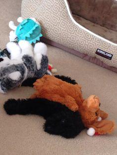 #Jackson❤️ Shag Rug, Jackson, Cute, Dogs, Decor, Shaggy Rug, Decorating, Kawaii, Pet Dogs